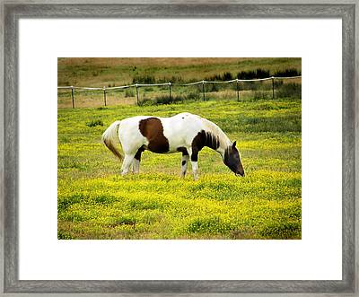 Yellow Fields Horse Framed Print