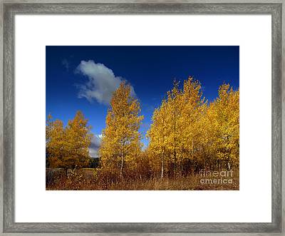 Framed Print featuring the photograph Yellow Flash by Irina Hays