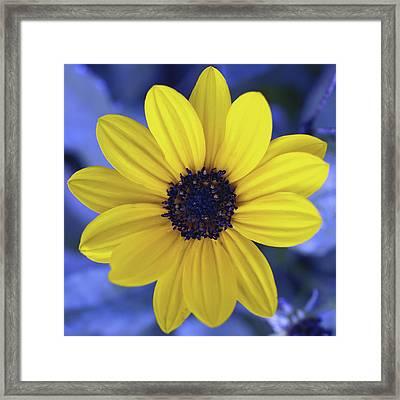 Yellow Flower 3 Framed Print