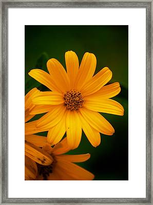 Yellow Flower Framed Print by Andre Faubert