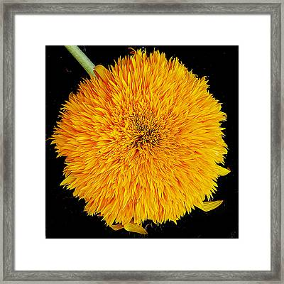 Framed Print featuring the photograph Yellow Flower by Elvira Ladocki