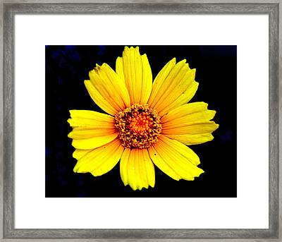 Yellow Flower Framed Print by Marty Koch