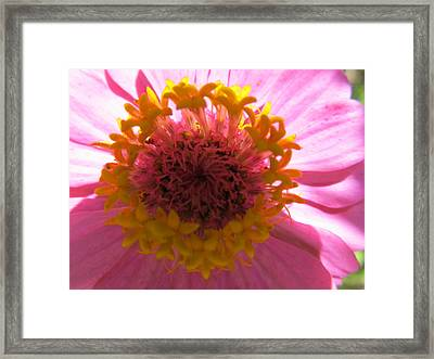 Framed Print featuring the photograph Yellow Flowerettes Around by Tina M Wenger