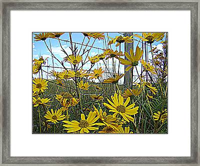 Framed Print featuring the photograph Yellow Flowers By The Roadside by Alice Gipson