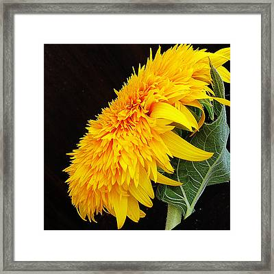 Framed Print featuring the photograph Yellow Flowers by Elvira Ladocki