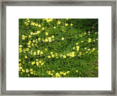 Yellow Flowers Framed Print