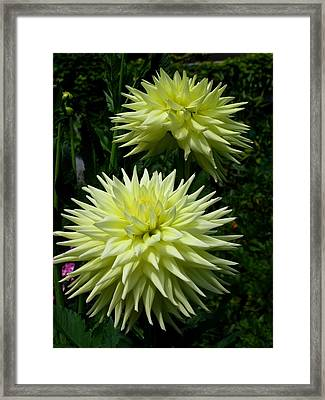 Yellow Flowers Framed Print by Kathy Long