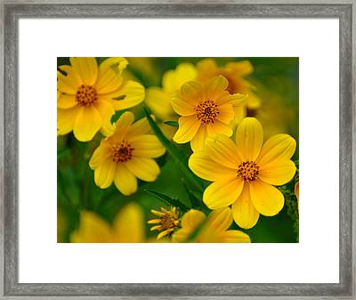 Yellow Flowers Framed Print by Marty Koch