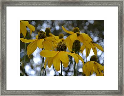 Yellow Flowers Framed Print by Naomi Berhane