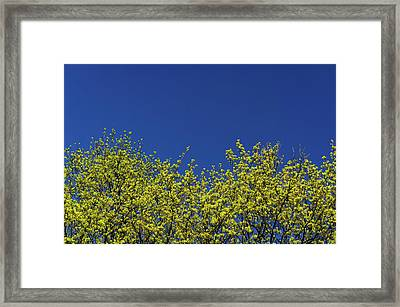 Yellow Flowers Tree Framed Print