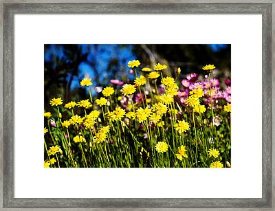Yellow Flowers Framed Print by Yew Kwang