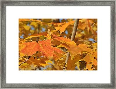 Yellow Foliage  Framed Print by Michael Jalbert
