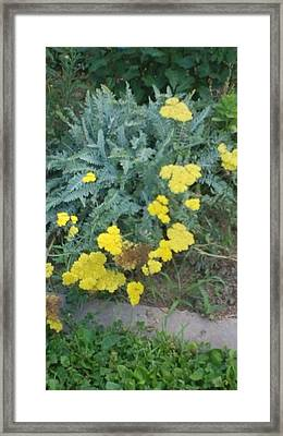 Yellow Garden Flowers And Green Ferns Framed Print by Thelma Harcum