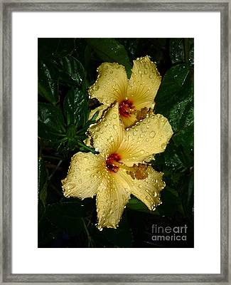 Framed Print featuring the photograph Yellow Hibiscus After The Rain by Renee Trenholm