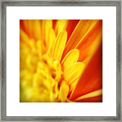 Yellow Hope Of Days To Come Framed Print