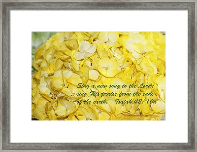Yellow Hydrangea Isaiah 42v10 Framed Print by Linda Phelps