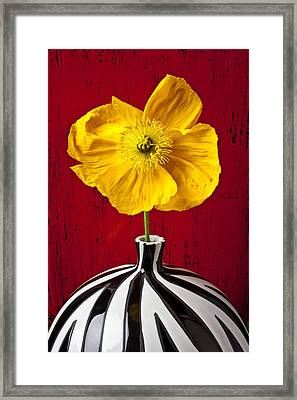 Yellow Iceland Poppy Framed Print by Garry Gay