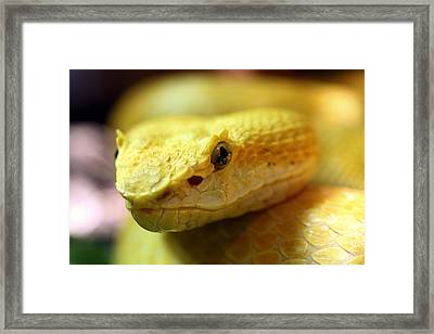 Yellow Framed Print by JC Findley