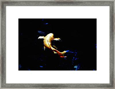 Yellow Koi Framed Print by Don Mann