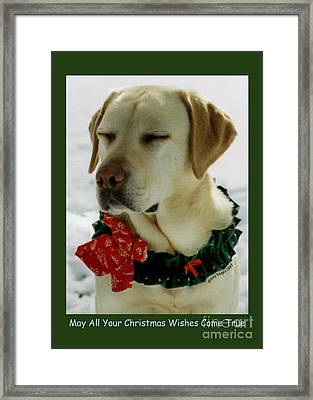 Yellow Lab Christmas Dreams Framed Print