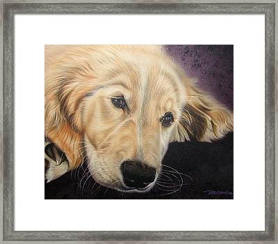 Framed Print featuring the painting Yellow Lab by Dan Menta