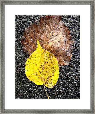 Yellow Leaf In Rain Framed Print