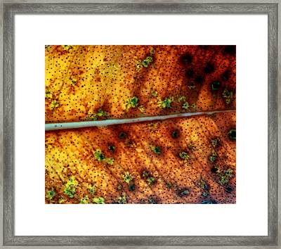 Yellow Leaf With Green Spots And Black Dots Framed Print
