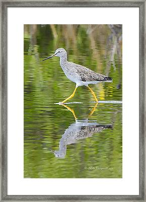 Yellow Legs Framed Print