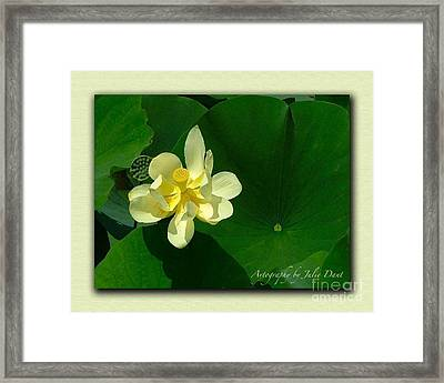 Yellow Lotus Blossom In Mississippi  Framed Print by Julie Dant