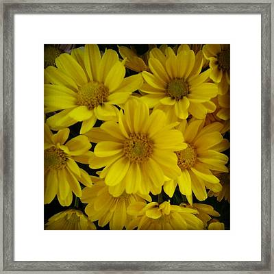 Yellow Love Framed Print by Chasity Johnson
