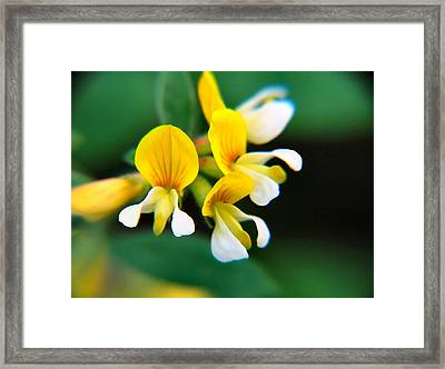 Framed Print featuring the photograph Yellow Macro by Wendy McKennon