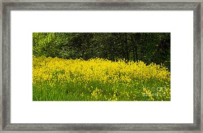 Yellow Meadow Flowers Framed Print