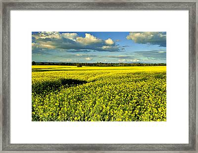 Yellow Mellow Framed Print