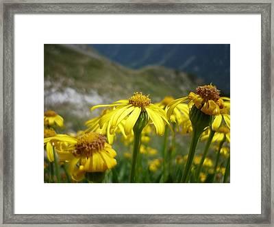 Yellow Mountain Flowers Framed Print by Martin Marinov