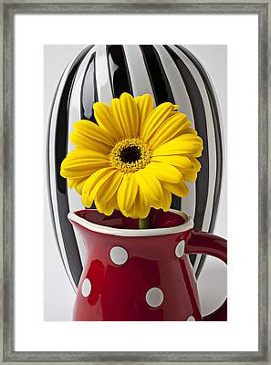Yellow Mum In Pitcher  Framed Print by Garry Gay