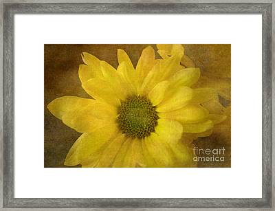 Yellow Mums Framed Print by Benanne Stiens