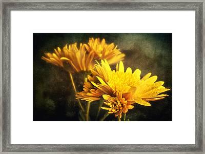 Yellow Mums Framed Print by Svetlana Sewell