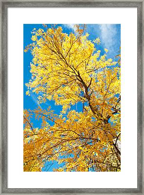 Yellow On Blue Framed Print by Bob and Nancy Kendrick