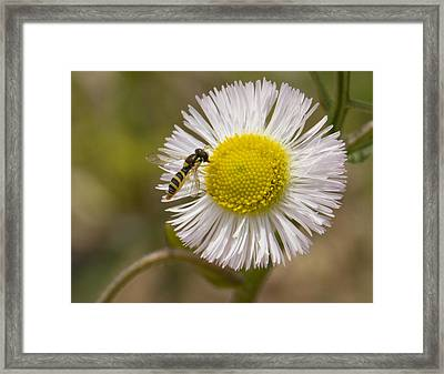 Yellow On Yellow Framed Print by Dean Bennett