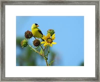 Yellow On Yellow Framed Print by Don L Williams