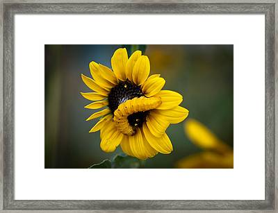 Framed Print featuring the photograph Yellow On Yellow by Monte Stevens