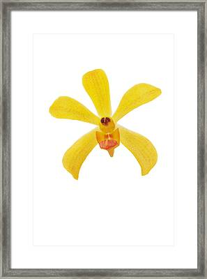 Yellow Orchid Framed Print by Atiketta Sangasaeng