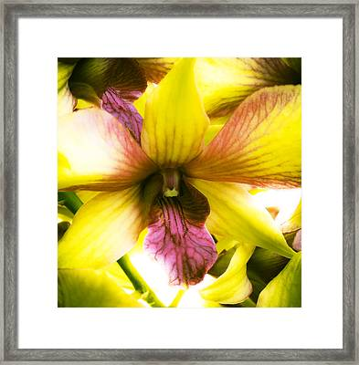 Yellow Orchid Framed Print by Joe Carini - Printscapes