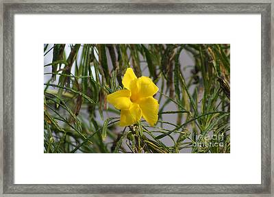 Framed Print featuring the digital art Yellow Orchid by John  Kolenberg