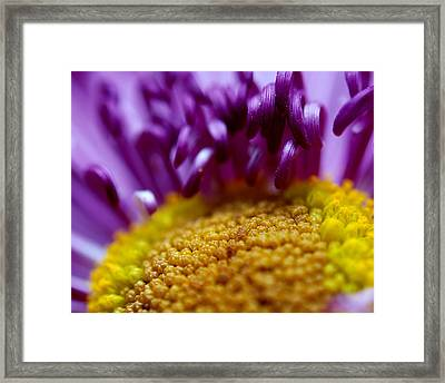 Yellow Pillow Framed Print by Christy Phillips