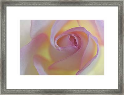 Yellow- Pink Framed Print by Carolyn Dalessandro
