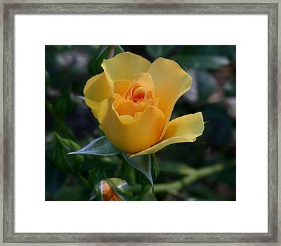 Yellow Queen Framed Print by Valia Bradshaw