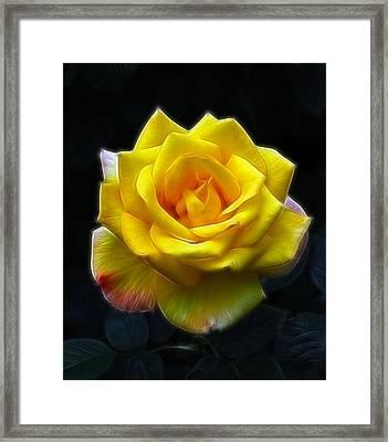 Yellow Rose In The Moonlight Framed Print by Georgiana Romanovna