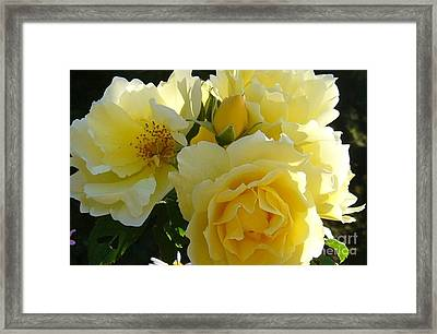 Framed Print featuring the photograph Yellow Rose by Jim Sauchyn