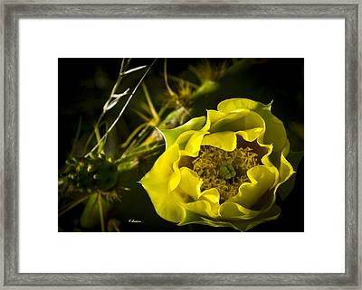 Yellow Rose Of Texas Framed Print
